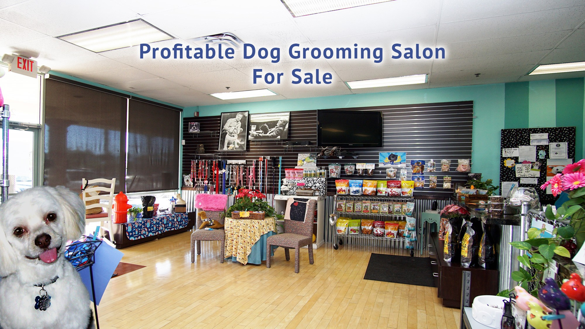 Now Sold Dog Grooming Salon For Sale Awesome Location Belltree Llc